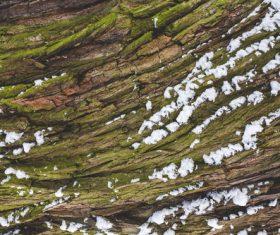 Tree Snow Background Stock Photo