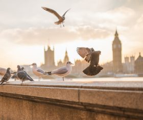 Urban pigeons and seabirds Stock Photo