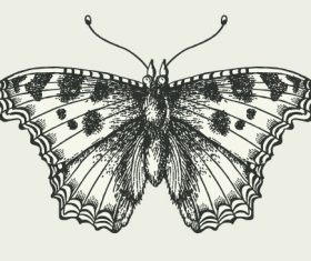 Vintage butterfly illustration vector