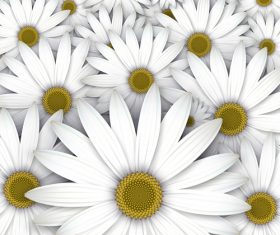 White chrysanthemum background vectors 04