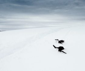 Wild penguines on cold snow land Stock Photo
