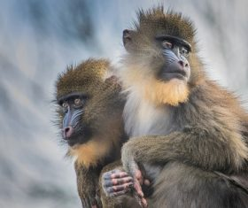 cute primate family Stock Photo