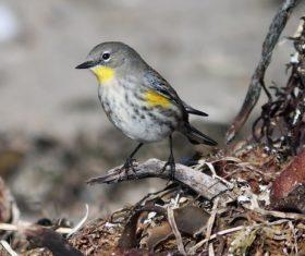 cute tiny bird in nature Stock Photo