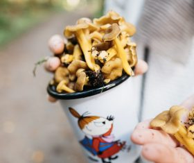 fresh mushroom contained in cups Stock Photo