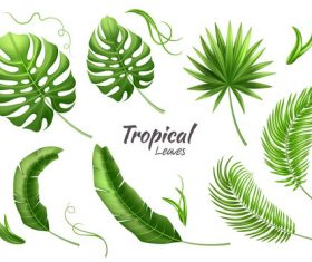 leaves of tropical trees vector illustration 03