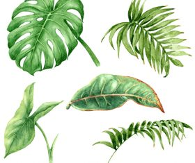 leaves of tropical trees vector illustration 06