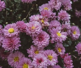 pink blooming flowers in nature Stock Photo