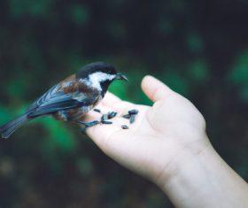 small wild bird on hand Stock Photo