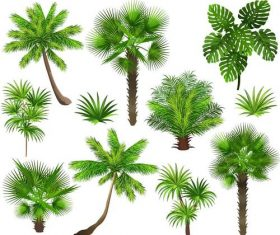 tropical tree illustration vector