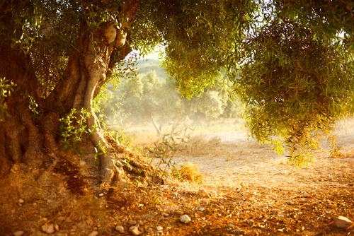 with luxuriant foliage of trees Stock Photo 05