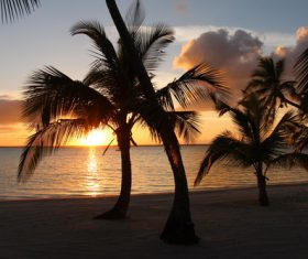 Bahamas Palm Island at sunset Stock Photo