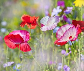 Beautiful wildflowers on summer meadow Stock Photo 01