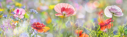 Beautiful wildflowers on summer meadow Stock Photo 02