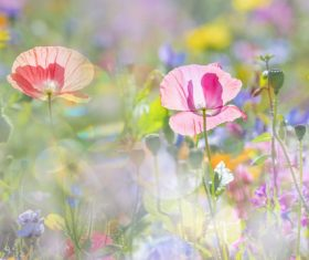Beautiful wildflowers on summer meadow Stock Photo 05