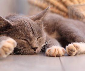 Brown cat sleeping Stock Photo
