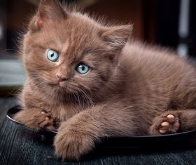 Brown kitten in the plate Stock Photo