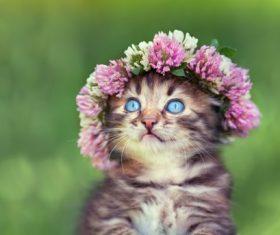 Cat wearing a wreath Stock Photo