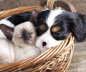 Cats and dogs sleeping in bamboo baskets Stock Photo