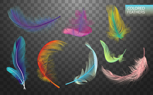 Colorful feather realistic design vector 01