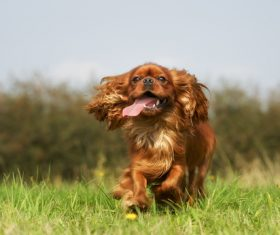 Dogs Running on the grass Stock Photo 05