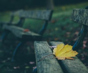 Fallen leaves on wooden chair Stock Photo