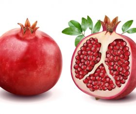 Fresh pomegranate vector material