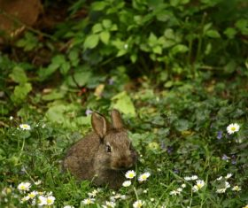 Grey hare on the grass Stock Photo