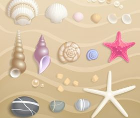 High quality Seashells vector set