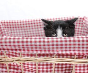 Kitten in bamboo basket Stock Photo