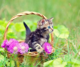 Kitten in the basket on the grass Stock Photo