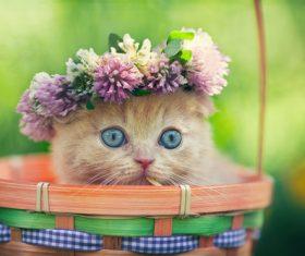 Kitten wearing wreath in bamboo basket Stock Photo