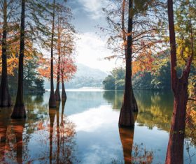 Large trees in the autumn lake Stock Photo