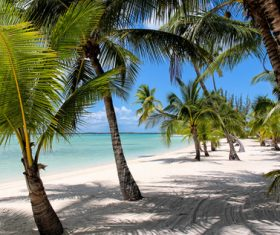 Palm Island Bahamas Stock Photo 02