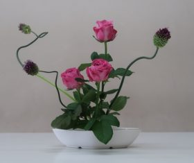 Pink Rose Potted plant Stock Photo