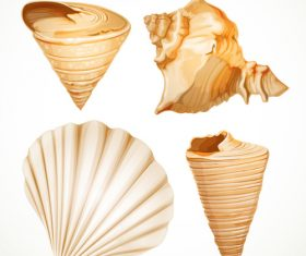 Set realistic seashells isolated on white background 1