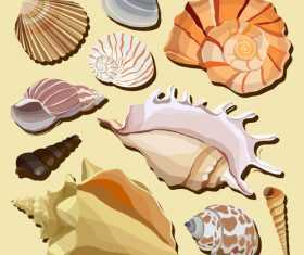 Set realistic seashells isolated on white background 3