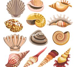 Set realistic seashells isolated on white background 4