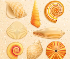 Set realistic seashells isolated on white background 5