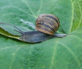 Small snail on green leaf Stock Photo