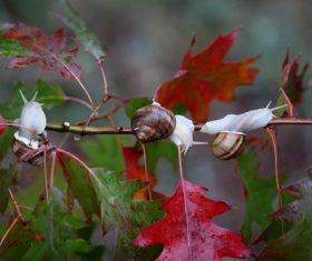 Snail crawling on maple branch Stock Photo