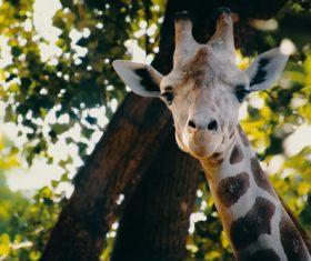 Stock Photo Cute giraffe head close-up