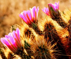 Stock Photo Desert flowers
