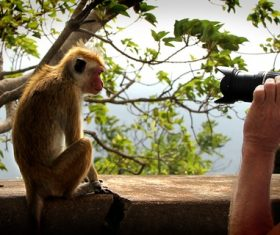 Stock Photo Man taking picture of monkey