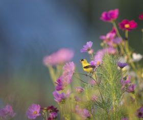 Tiny yellow bird in beautiful garden Stock Photo