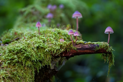 Vegetation and mushrooms growing on dead wood Stock Photo