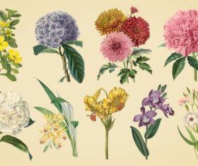 Vintage color illustrations of flowers  vector 01