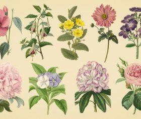 Vintage color illustrations of flowers  vector 02