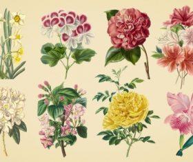 Vintage color illustrations of flowers  vector 03