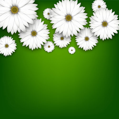 White chrysanthemum wiht green background vectors 01