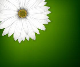 White chrysanthemum wiht green background vectors 02